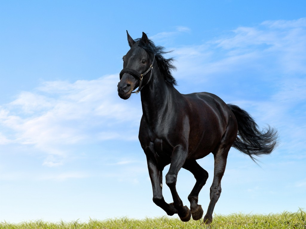 Best Wallpaper Horse Dark Brown - black-horse  Graphic_715132.jpg